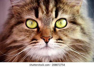Portrait of cute cat with big yellow eye closeup