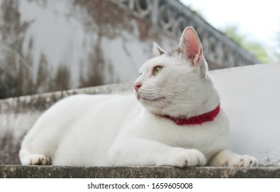Portrait of cute cat lie down on stairway and looking out