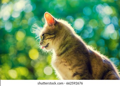 Portrait of cute cat sitting outdoor against green natural background. Bottom view