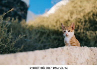 Portrait of cute cat standing on wall