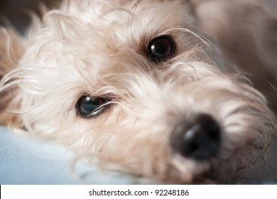 Portrait of cute crossbreed white dog
