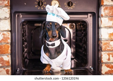 portrait of a cute dachshund dog, black tan, chef cook in a white hat, peeks out of the oven in the kitchen