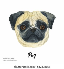 Portrait cute dog isolated on white background. Watercolor hand-drawn illustration. Popular breed dog. Greeting card design. Pug.