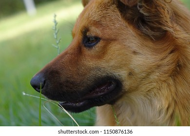 Portrait of a cute dog on the meadow