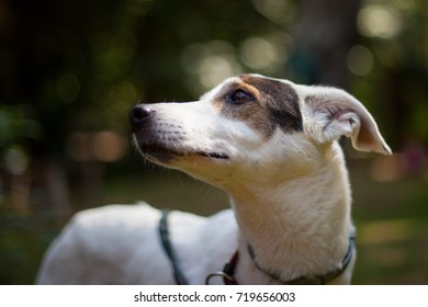 Portrait of a cute dog with park on the background