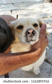 Portrait of a cute dog with pink nose in human embrace on Corfu, Greece
