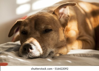 Portrait of a cute dog resting on the bed.