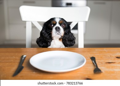 Portrait of a cute dog waiting for meal by the kitchen table