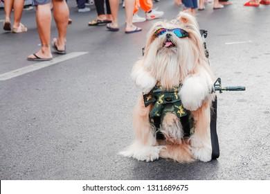 Portrait of cute dog wearing sunglasses holding a gun. very Amusing