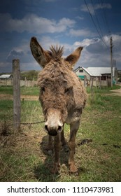 Portrait of a cute donkey. Behind the donkey is located a village and the blue sky with clouds.