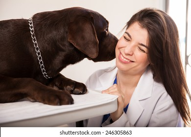 Portrait of a cute female veterinarian being kissed and licked by a brown labrador