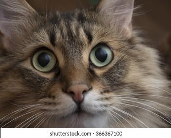 Portrait of a cute fluffy cat closeup.