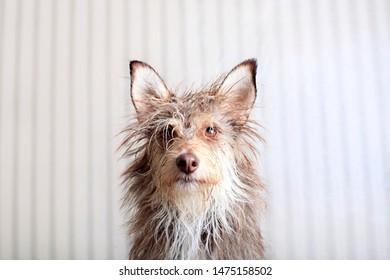 Portrait of a cute fluffy dog