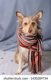 Portrait of a cute fluffy dog with a scarf