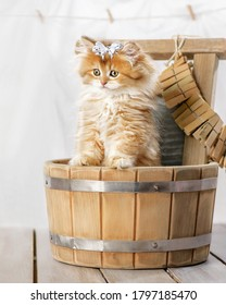 Portrait of a cute fluffy kitten with a bow in a tub in the laundry