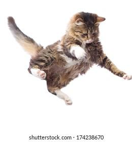 portrait of a cute flying fluffy kitten