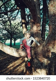 Portrait of cute funny little blonde Caucasian girl sitting on large wide tree branch at sunset. Active kid playing outdoor. Summer fun activity concept. Happy authentic childhood lifestyle.