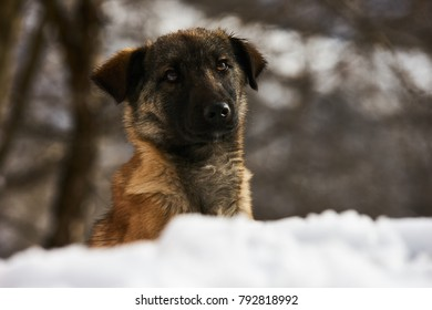 Portrait of cute funny puppy dog sit on snow