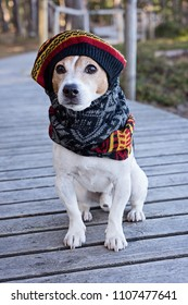 Portrait of cute jack russell dog wearing in knitted beret and scarf sitting on the wooden boardwalk, looking at camera. Season change and care of dog health in the cold season walking concept