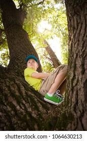 Portrait of cute kid boy sitting on big tree on a sunny summer day.