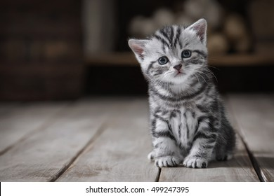 Portrait of cute cute kitten on a background of old utensils