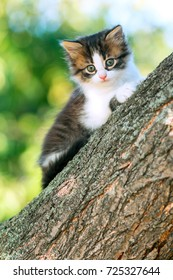 portrait of a cute little fluffy kitten climbing on a tree branch in a village in the nature
