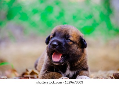 Portrait of a cute little puppy smiling at camera.