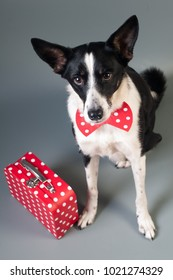 Portrait of cute mixed breed dog in bow tie and text love with two hearts