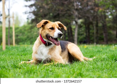 Portrait of cute mixed breed dog