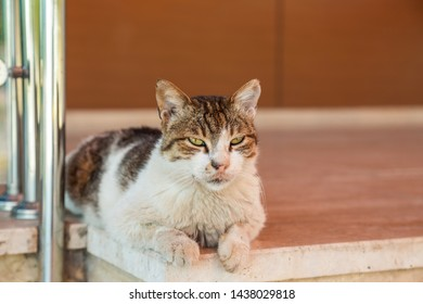 Portrait of cute old experienced cat with suspicious look watching around. Horizontal color  photography.