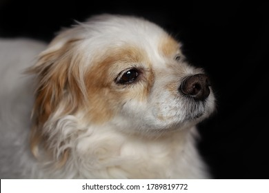 Portrait of cute posing dog, lhasa apso