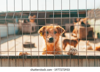 Portrait of cute red hair dog looking trough fence. Adoption concept.