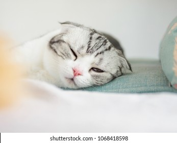 Portrait of a cute Scotland fold cat lying on couch with one eye closed and one eye half open, sleepy expression.