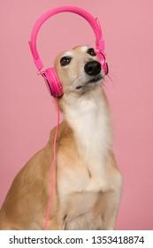 Portrait of a cute silken windsprite wearing pink headphones on her head on a pink background