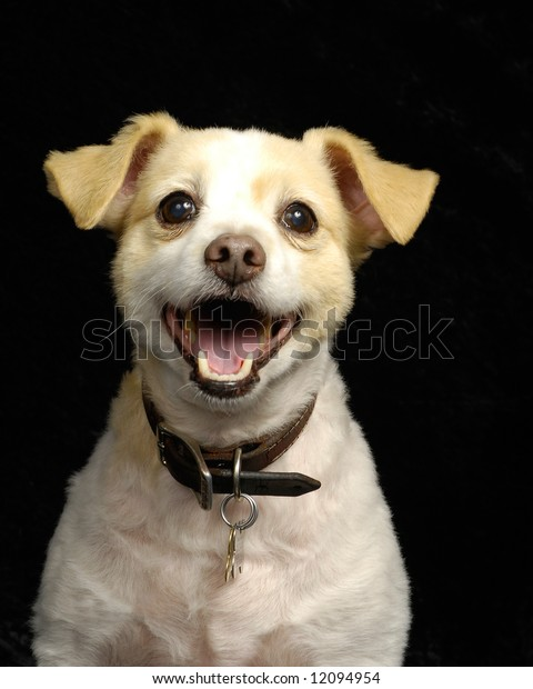 A portrait of a cute, smiling, young dog