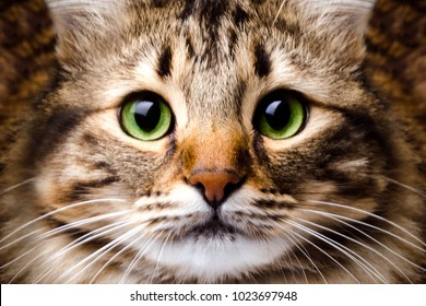 portrait of a cute, striped cat with green eyes, background