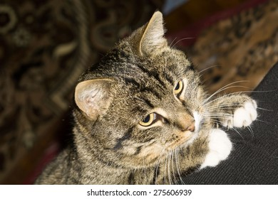 Portrait of cute tabby cat posing, close up view.