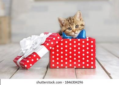Portrait eines süßen Kätzchens mit einer Schleife in einer Geschenkbox