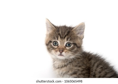 Portrait of cute tabby kitten isolated on white background