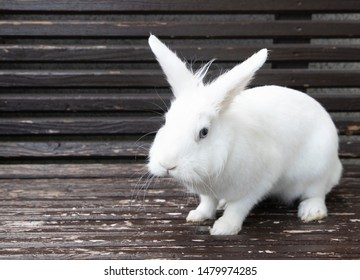 portrait of cute white rabbit on a shabby bench