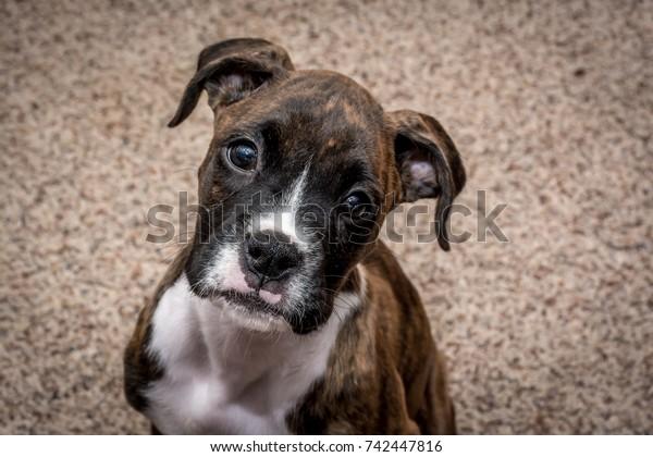 portrait-cute-wide-eyed-ten-600w-7424478