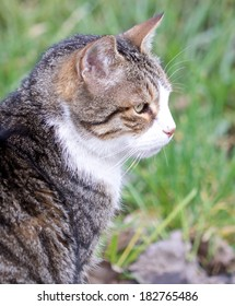 Portrait of a cute young cat sitting on a meadow
