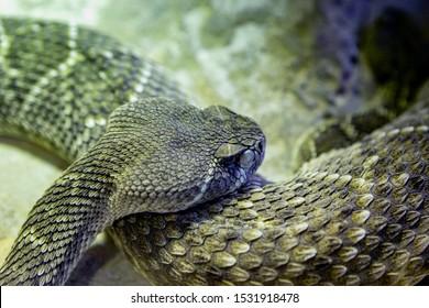 Portrait of a dangerous green snake in the terrarium