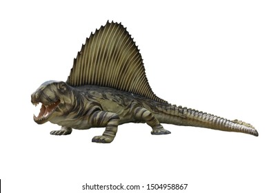 Portrait of dimetrodon isolated on white background.Triceratops is an carnivore dinosaur lived in triassic period