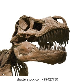 Portrait of a dinosaur skeleton, isolated on pure white.