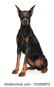 Portrait of Doberman on white background