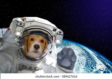 Portrait of a dog astronaut in space on background of the globe. Elements of this image furnished by NASA.