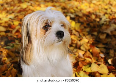 Portrait of a dog in autumn leaves