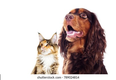 portrait of a dog and a cat looking sideways