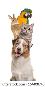 Portrait of a dog, cat, rabbit and a parrot piled up vertically isolated on a white background